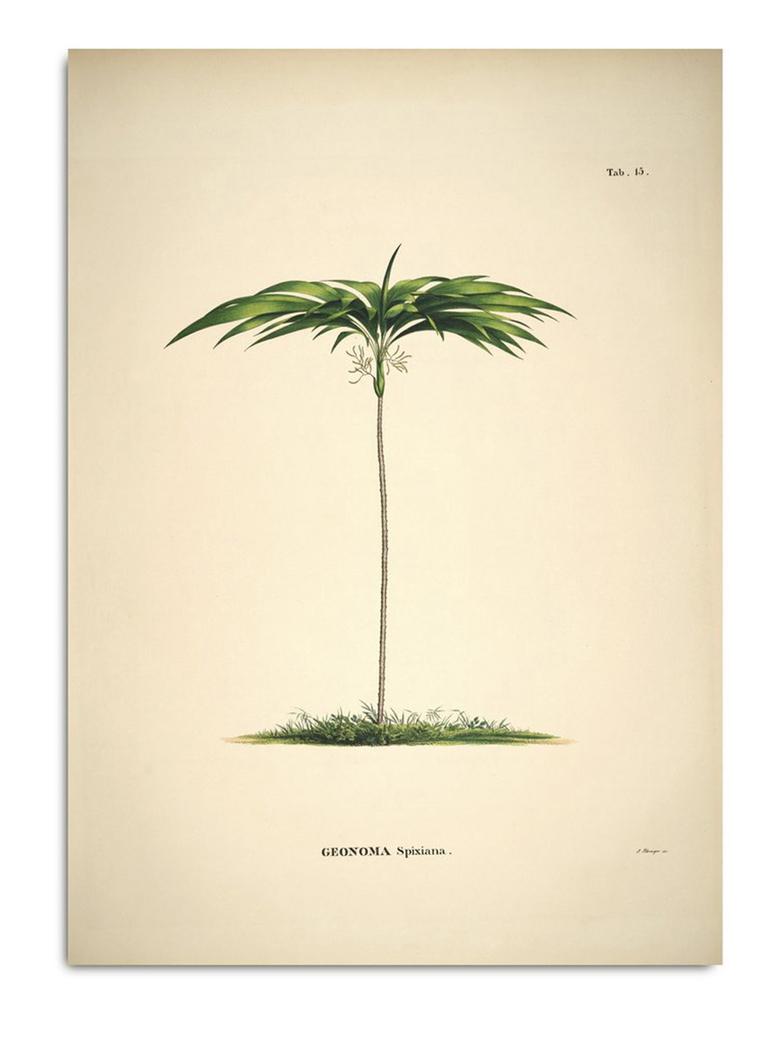 Botanical Palm Print Geonoma Spixiana