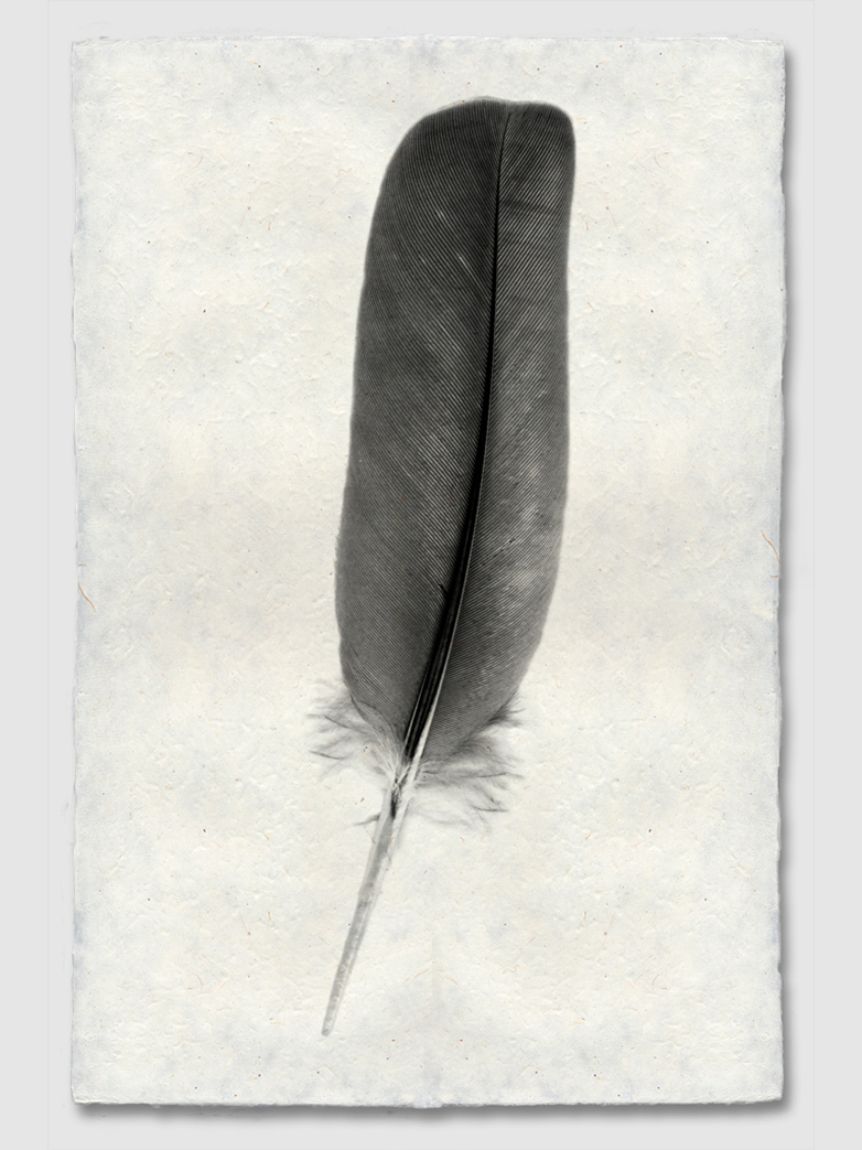Feather Study #4