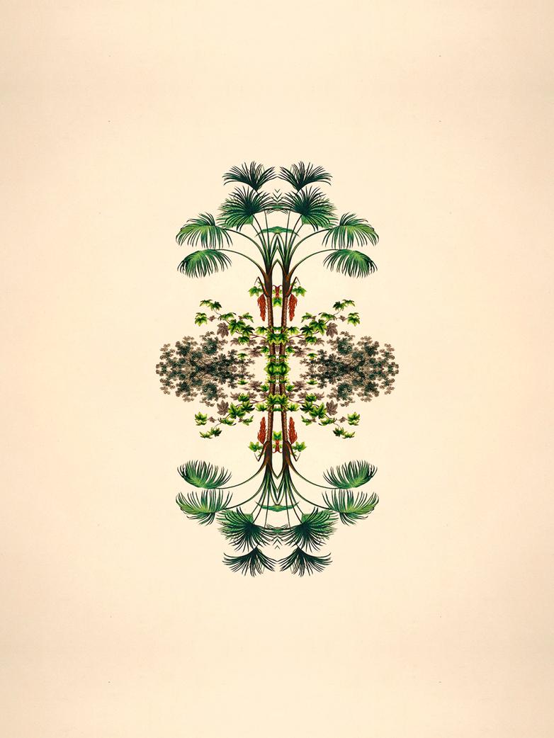 Limited Botanical reflection II