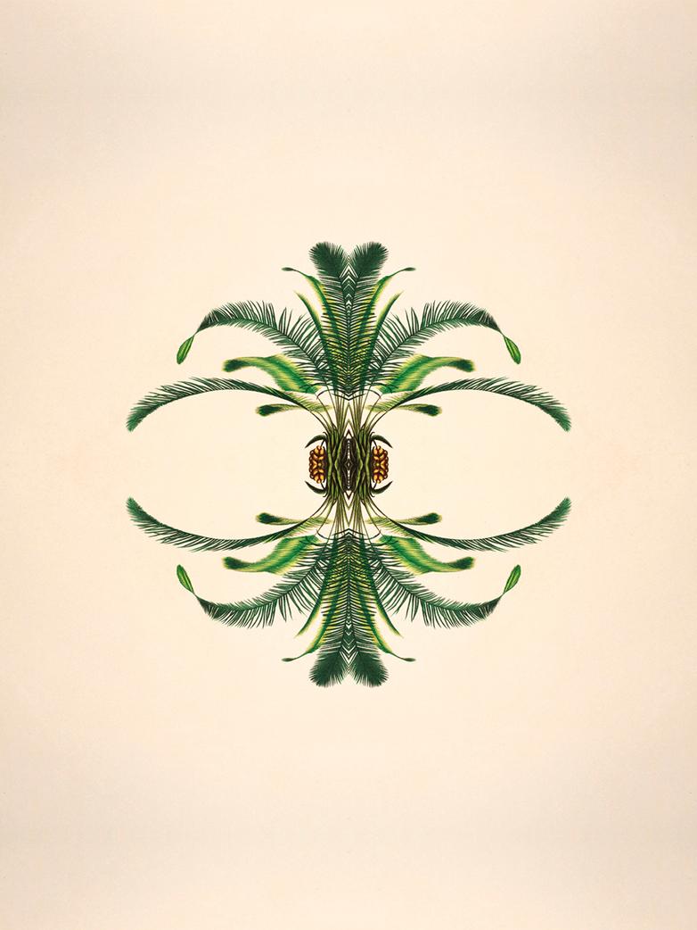Limited Botanical reflection I